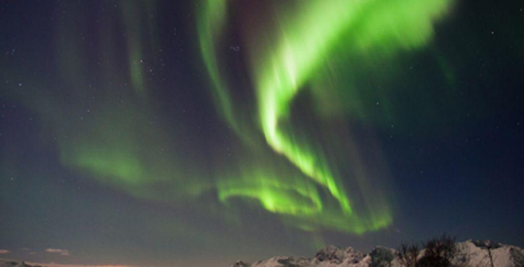 - The Northern Lights & Arctic Wildlife - Sortland - Norway Sortland