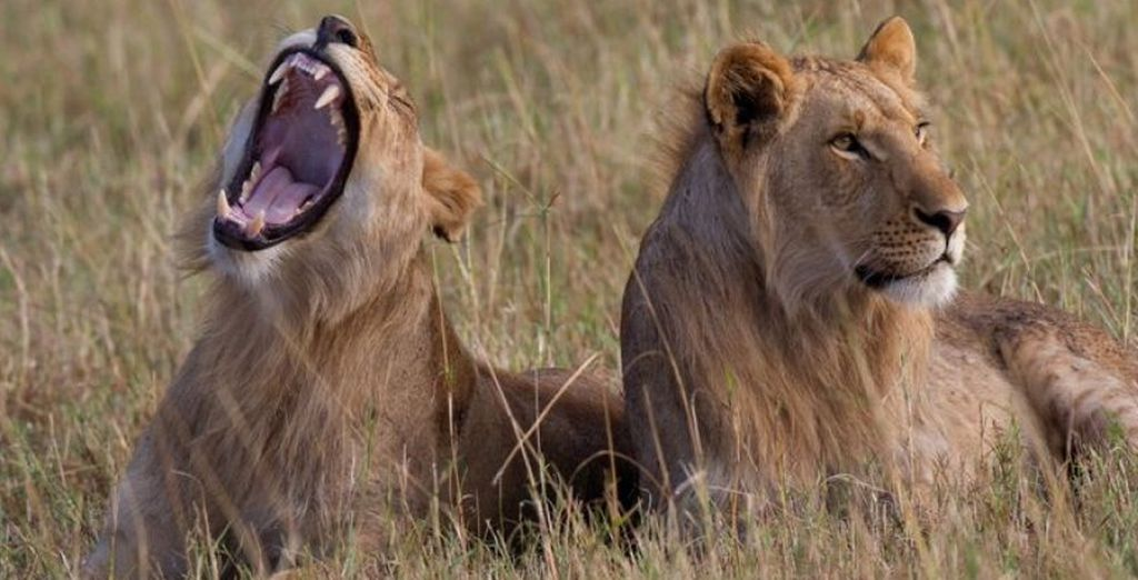 Do some 'Big Five' game viewing