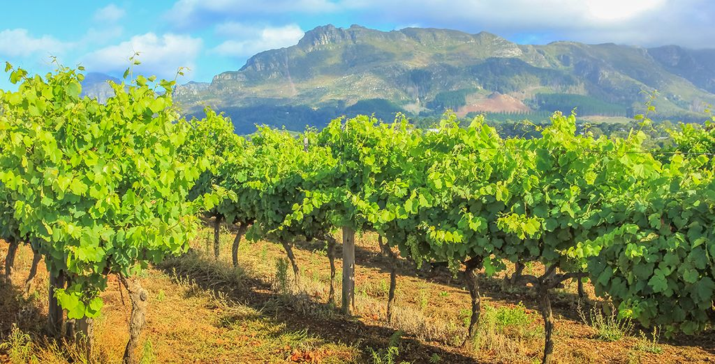 Along the way you will go wine tasting in Stellenbosch...