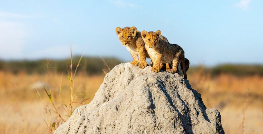 La réserve Gondwana en safari guidé