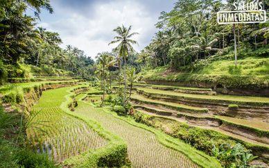 Sens Ubud 4* y Sakala Resort 5*