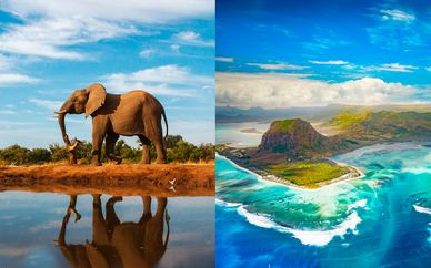 Sudáfrica con safari y The Westin Turtle Bay 5*