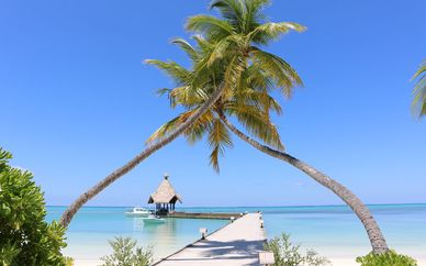 Hôtel Canareef Resort Maldives 4*