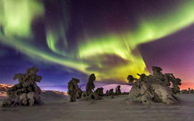 Safari artico sotto le luci dell'aurora