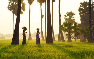 The Payogan Resort Villa Ubud & The Leaf Jimbaran 5*