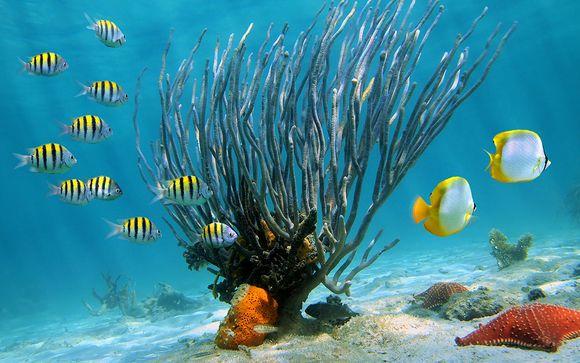 Welkom in... Punta Cana!