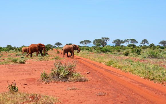 Uw safari indien u kiest voor aanbieding 1