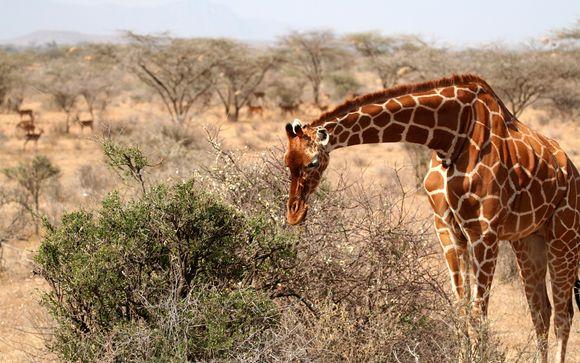 Willkommen in... Kenia und Sansibar!