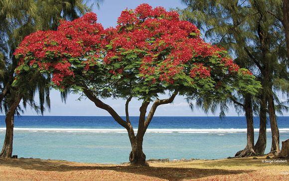 Willkommen auf... La Réunion!