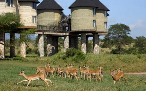 Ihre Unterkunft während der Safari