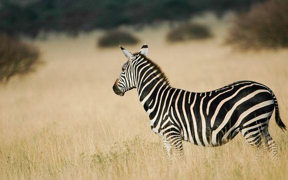 Su safari de 2 días y 1 noche