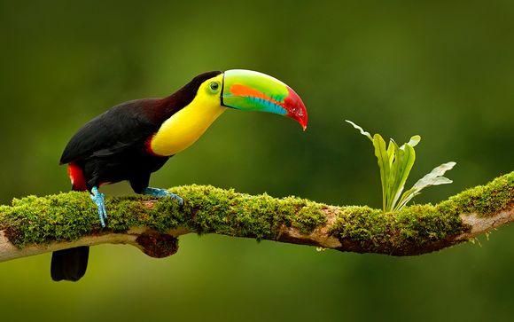 Costa Rica San José - Experiencia en el bosque lluvioso desde 1.988,00 €