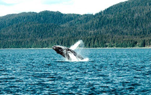 Canadá con avistamiento de ballenas y Nueva York opcional