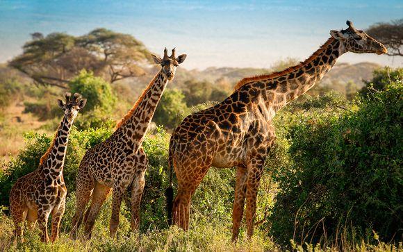 Tu safari en la opción 1