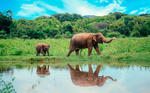 Sri Lanka Colombo - Descubriendo Sri Lanka desde 1.351,00 €