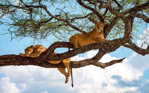 Pre-extensión opcional: Safari de 3 o 4 noches