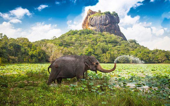 Circuit les Essentiels du Sri Lanka 8 ou 10 nuits