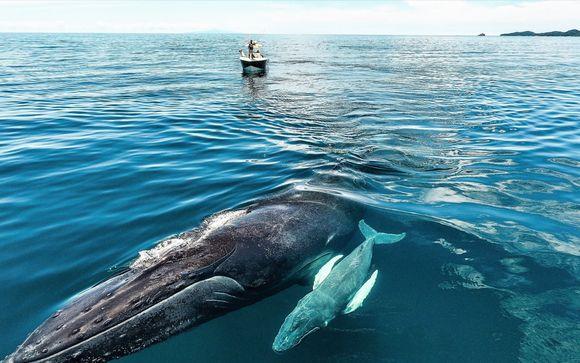 Croisière Observation des baleines dans l'archipel Las Perlas