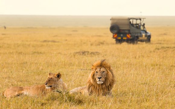 Votre Safari pour plus d