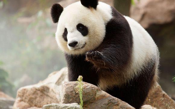 Rendez-vous... au Zoo de Beauval