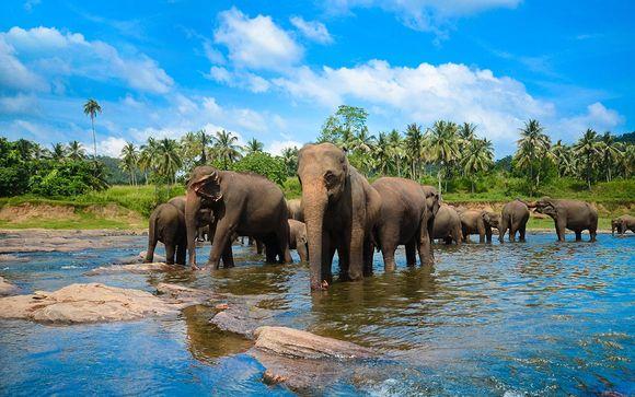 Circuit Sri Lanka - Dubaï : le programme