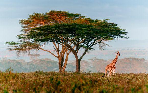 Safari 2 giorni / 1 notte: Ngutuni Wildlife Sanctuary e Sarova Saltlick