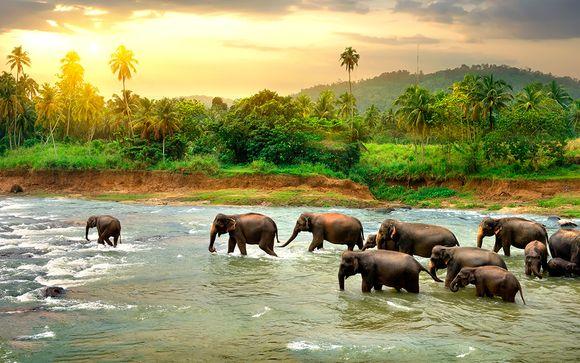 Tour privato Sri Lanka in 5* o 5* lusso  con possibile soggiorno al Park Rotana 5* Abu Dhabi