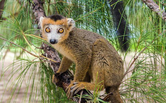 Welkom op... Madagascar