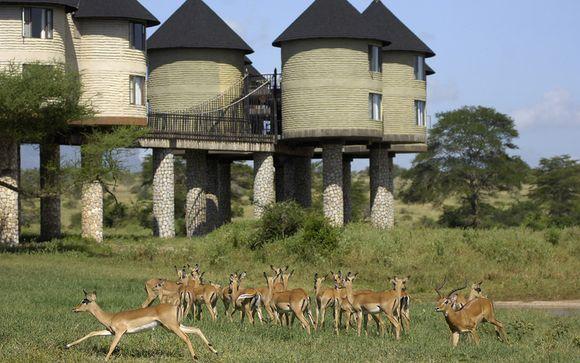 Accommodaties tijdens de safari
