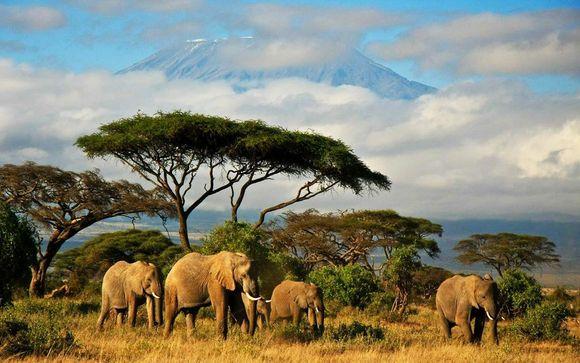 Simba Safari and Zanzibar