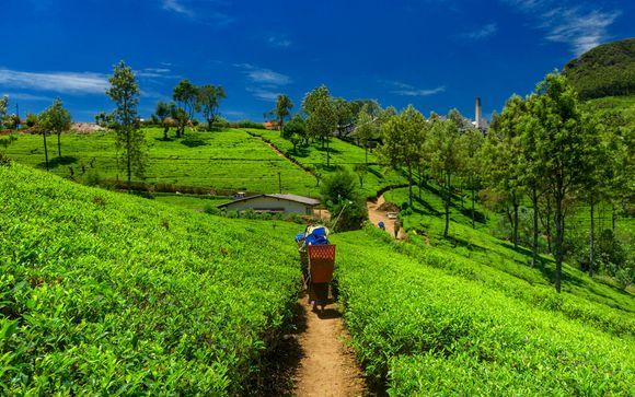 8 or 10 Nights Discovering Sri Lanka
