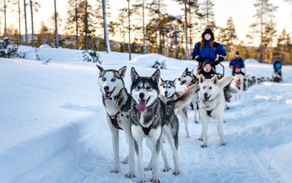 Autentica esperienza Siberian Husky (3 ore, pranzo incluso)