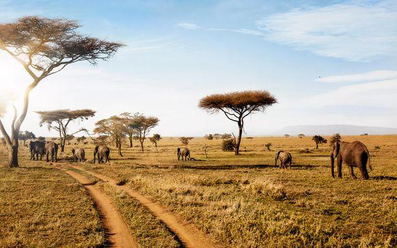 Votre safari en un clin d'œil